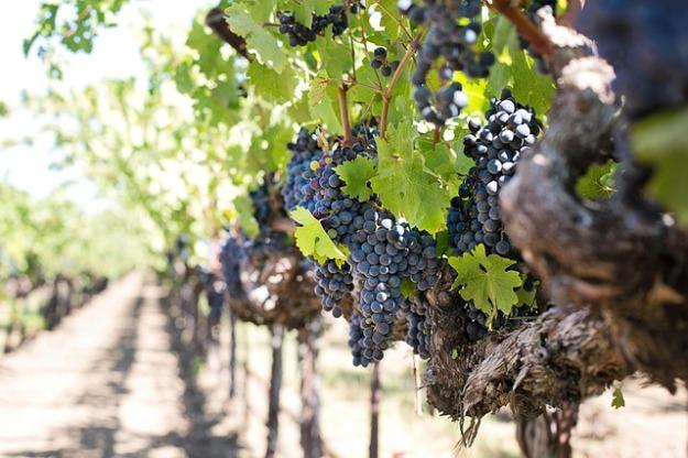 grapes-1952073_640