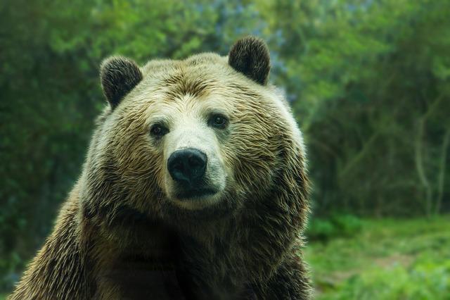 bear-2574086_640