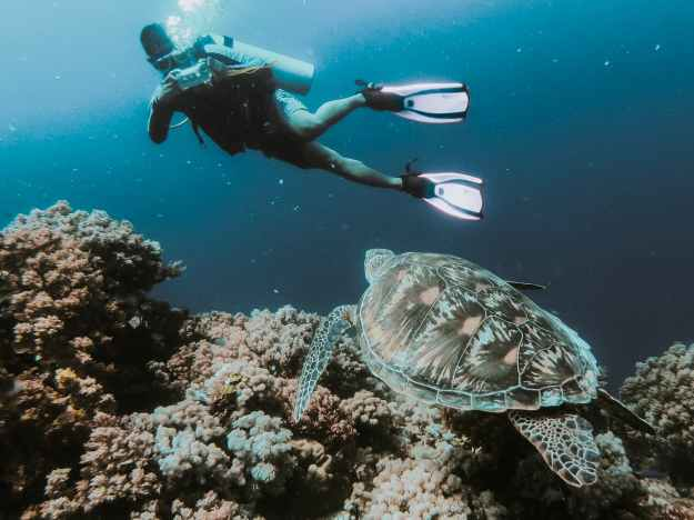 person swimming under water taking photo of turtle